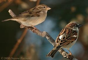 Sparrow-love-story